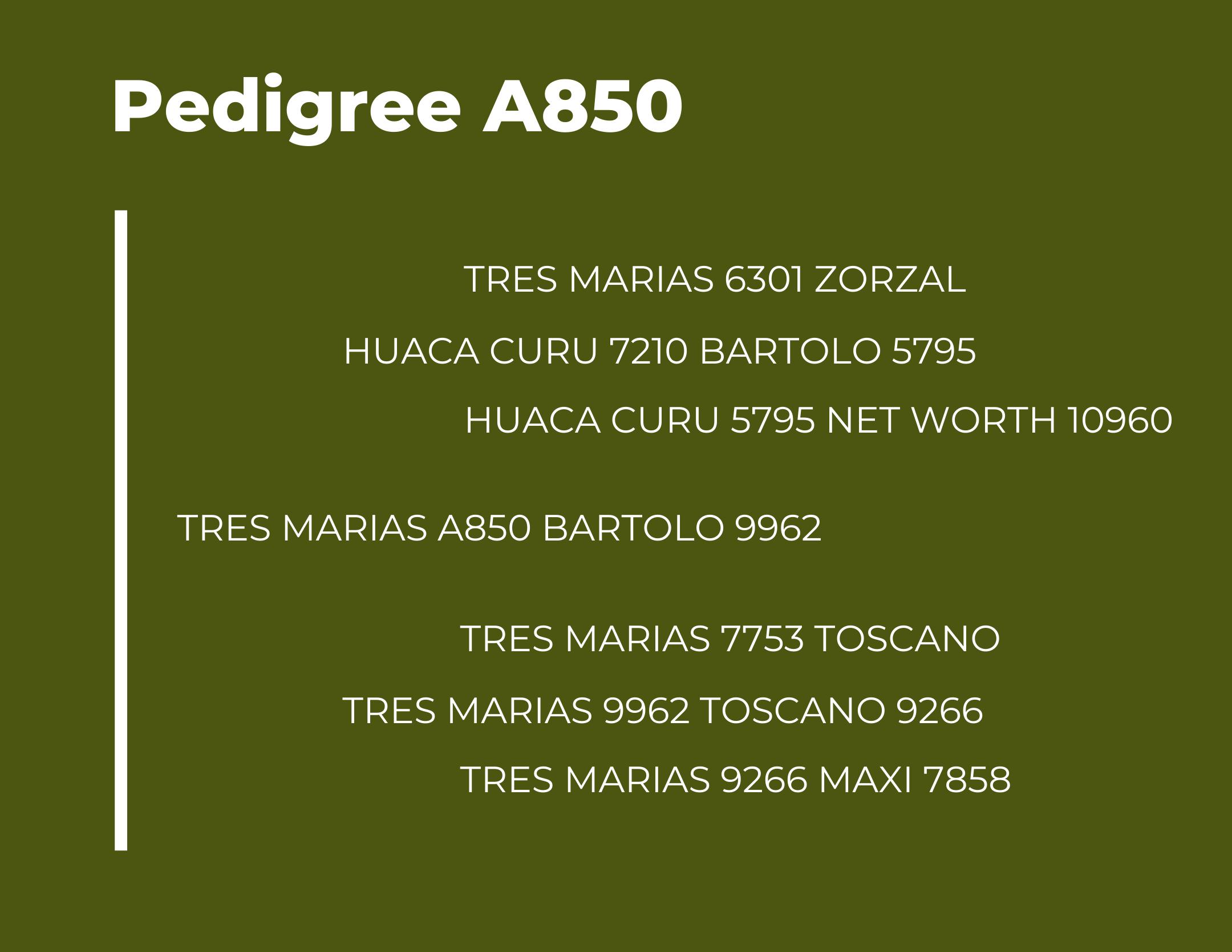 TM A850