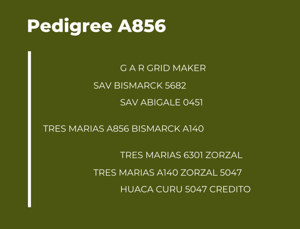 Catalogo Tres Marias Pedigree A856