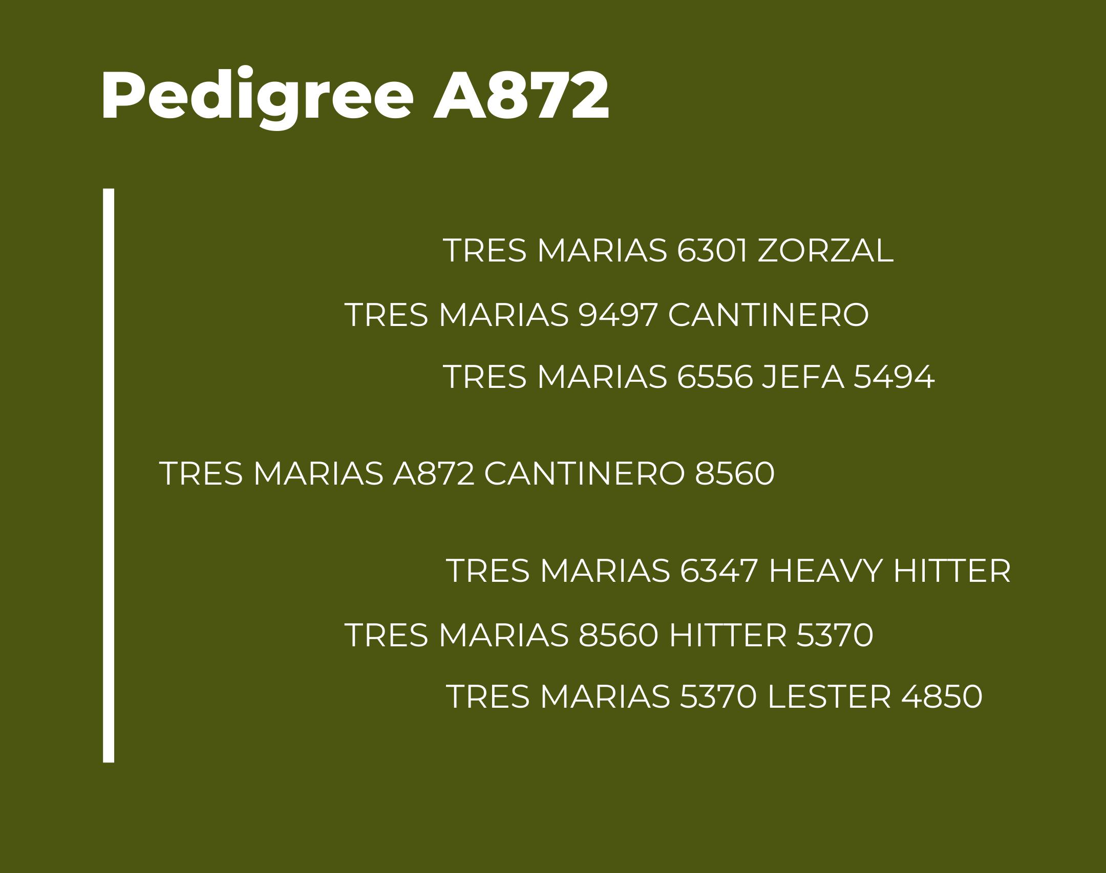 Tres Marias A872