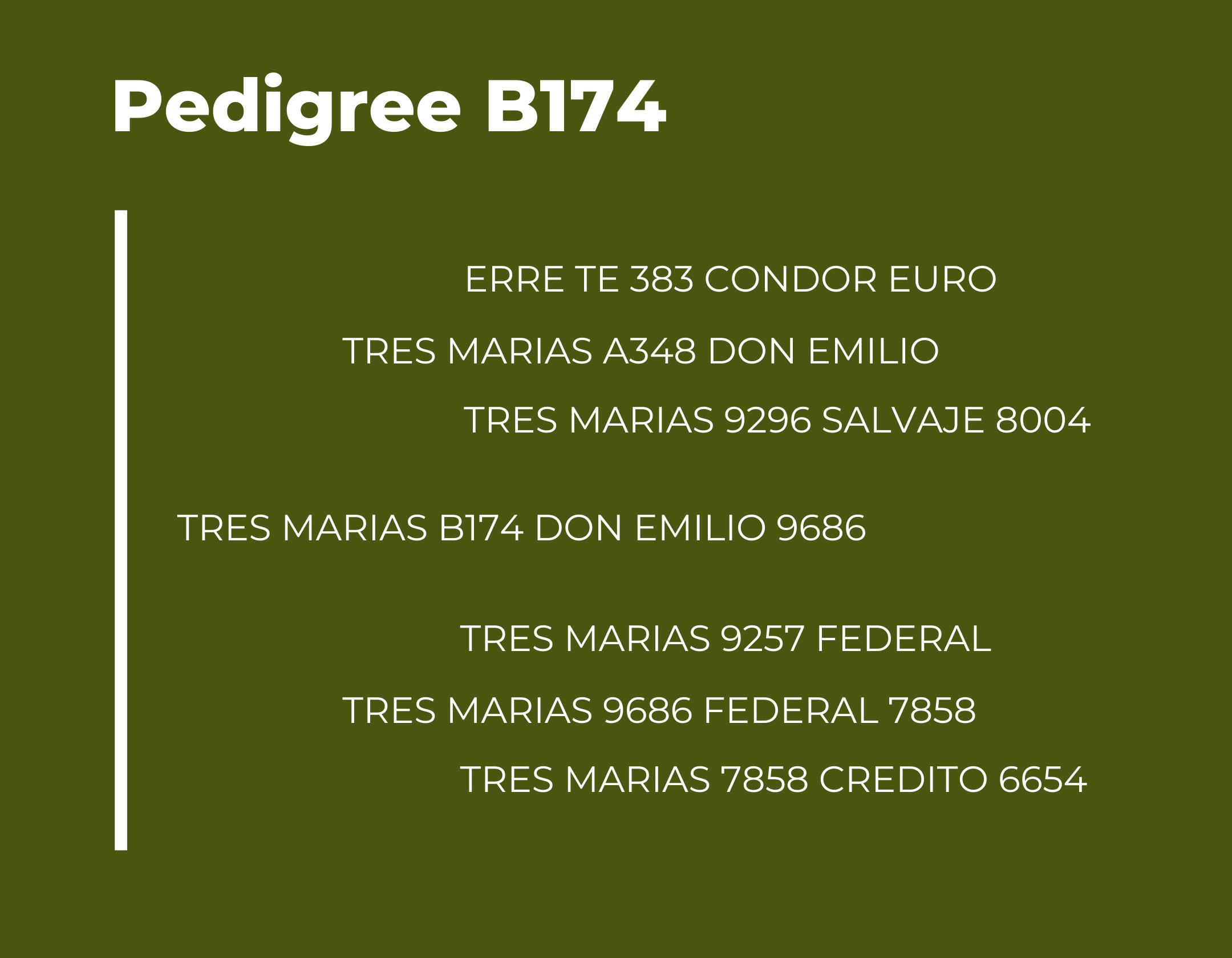 TM B174