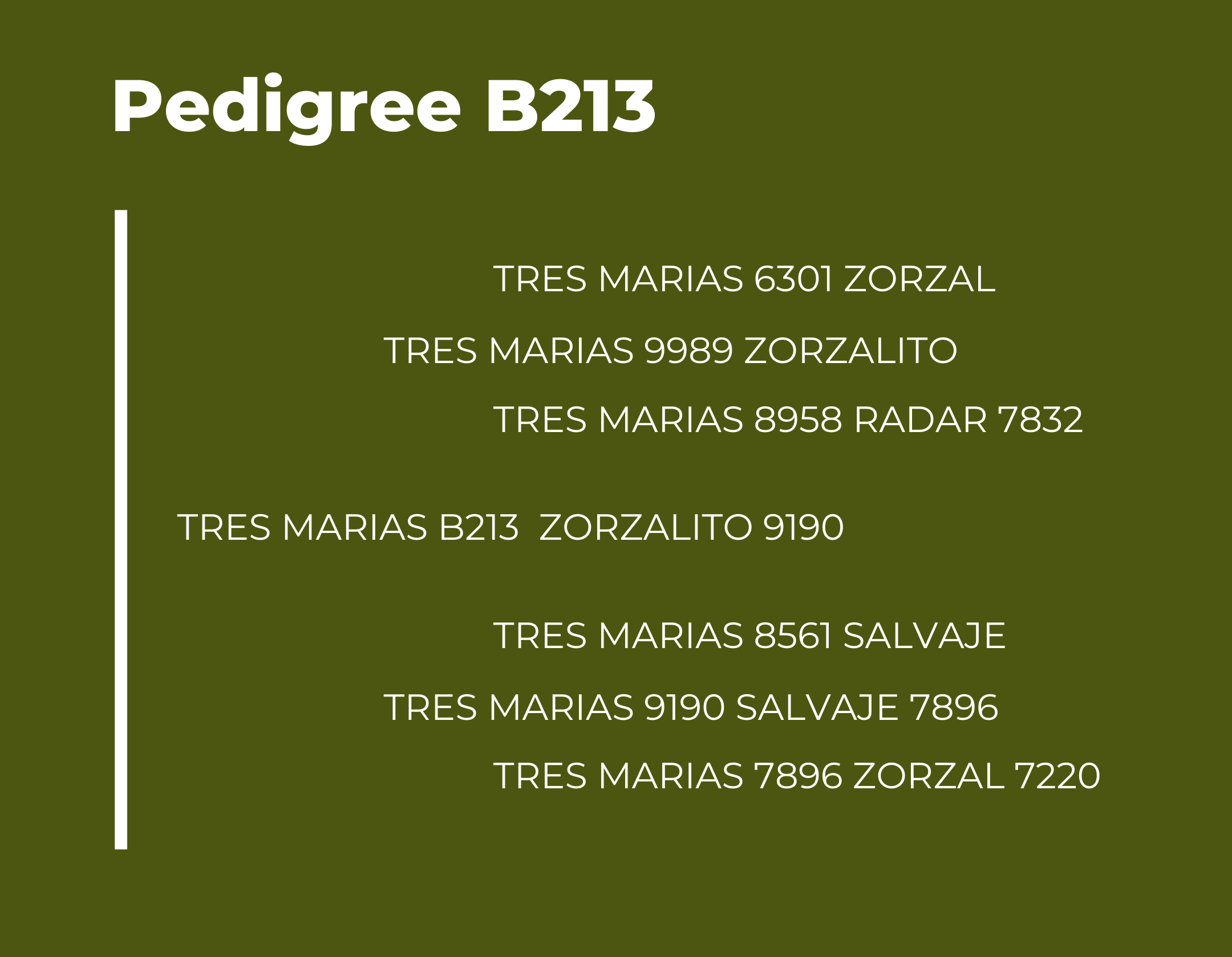 Pedigree Tres Marias B213