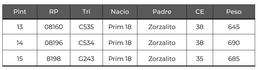 Toros PC remate 2020 13, 14, 15 (1)