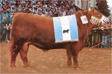 BARTOLOMÉ | Gran Campeón Macho 1995