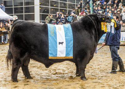 Don Emilio | Gran Campeón Macho 2018