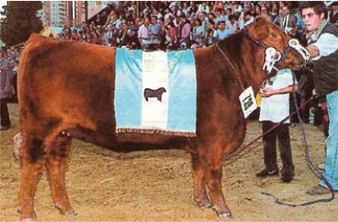 Ganadora | Gran Campeón Hembra 1997
