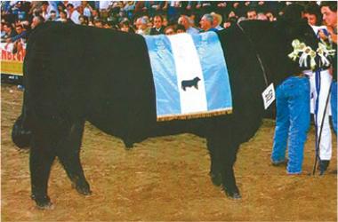Lester | Gran Campeón Macho 1997