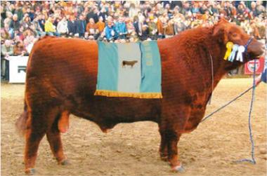 QUEBRACHO | Gran Campeón Macho 2001