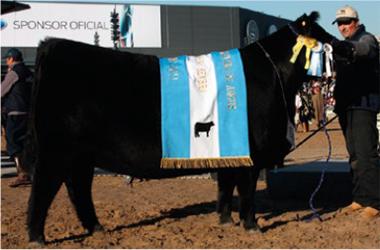 AREIA | Gran Campeón Hembra 2011