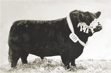 Avestruz | Gran Campeón Macho 1972
