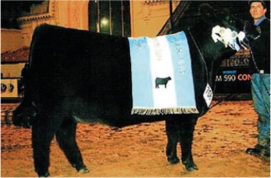 BARAJA | Gran Campeón Hembra 2006
