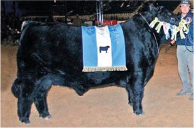 CANDOMBE | Gran Campeón Macho 2006