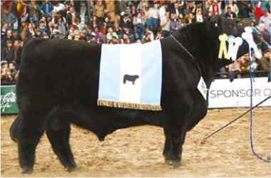 FEDERAL | Gran Campeón Macho 2013