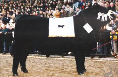 Junior | Gran Campeón Macho 1999