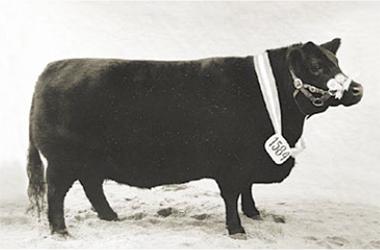 Madreselva | Gran Campeón Hembra 1972