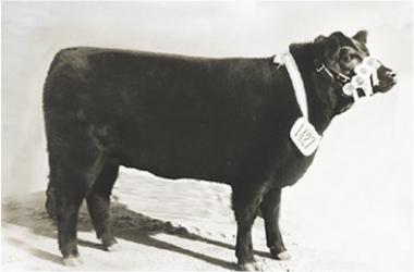 Muñeca | Gran Campeón Hembra 1973