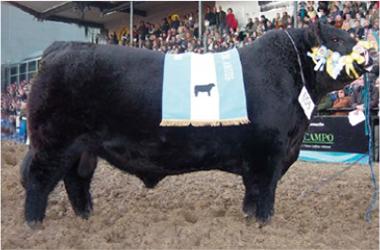 ZORZAL | Gran Campeón Macho 2004