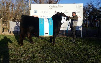 Gran Campeón Macho y Reservada en la Expo de Primavera